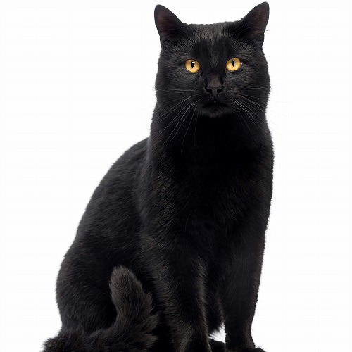 黒猫の画像 p1_20