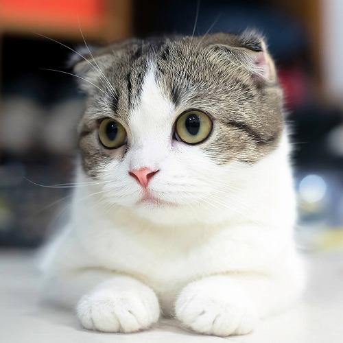 猫の画像 p1_29