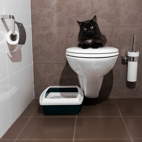原因 猫 下痢