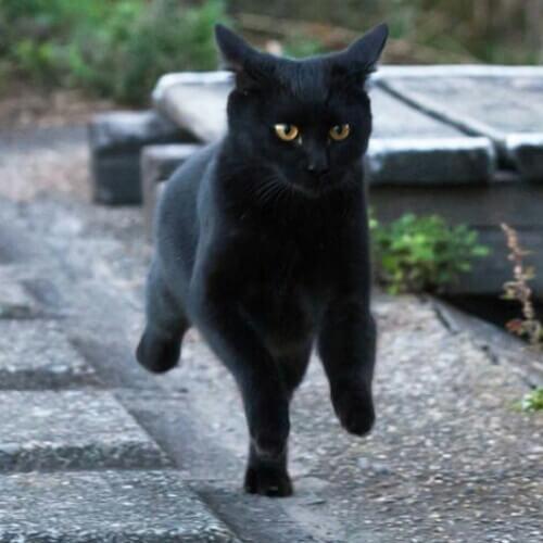猫が『トイレ後』に走り回る2つの理由