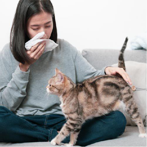 【猫の気持ち】ニャ~ン☆こんな鳴き方をするときはどんな気持ち?