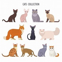ネコの性格は9パターン?プロが語る「猫は柄で性格