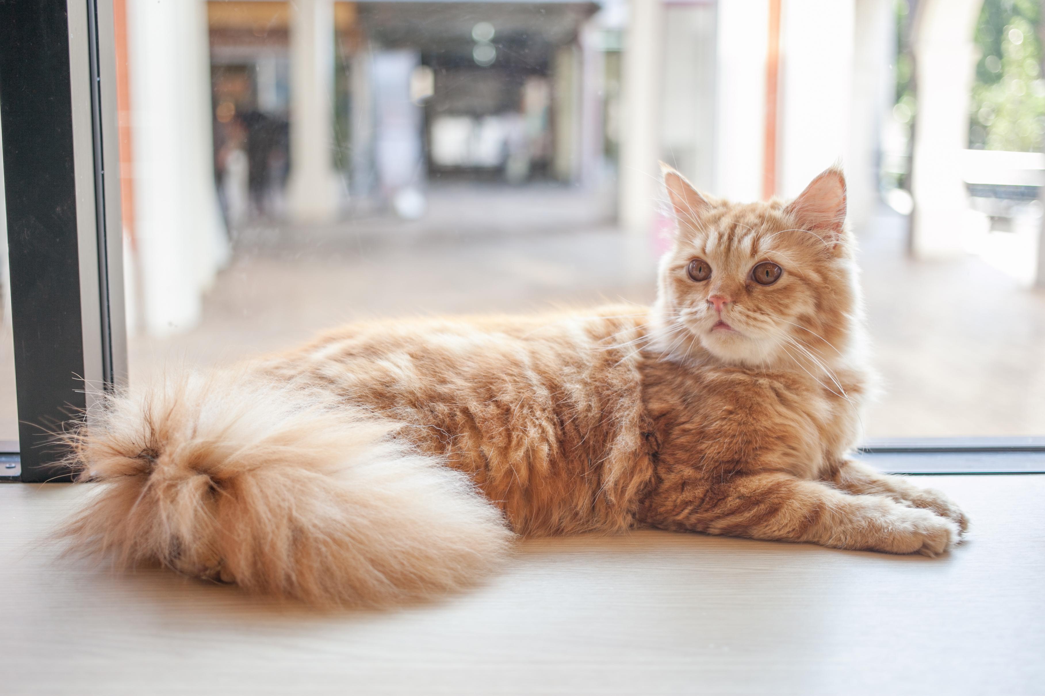 しっぽ 立てる 猫