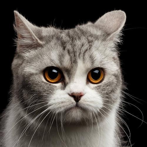 いつもする仕草からわかる猫のホンネとは