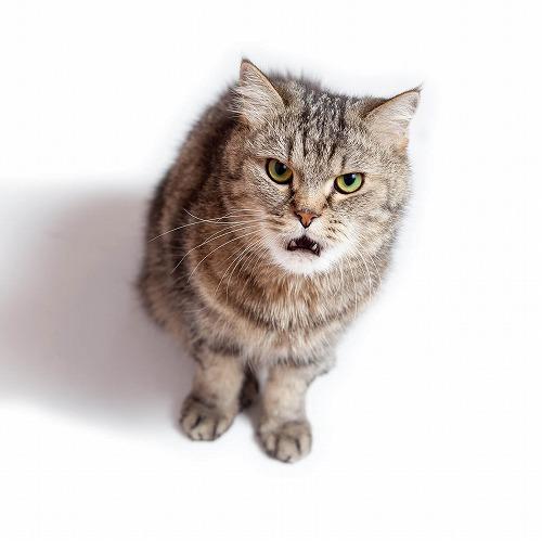分離 不安 猫