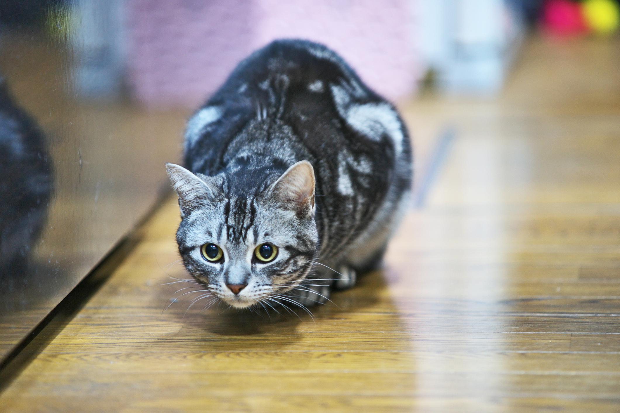 猫にとって遊びは狩りだ!猫の狩猟本能を刺激する上手な遊び方