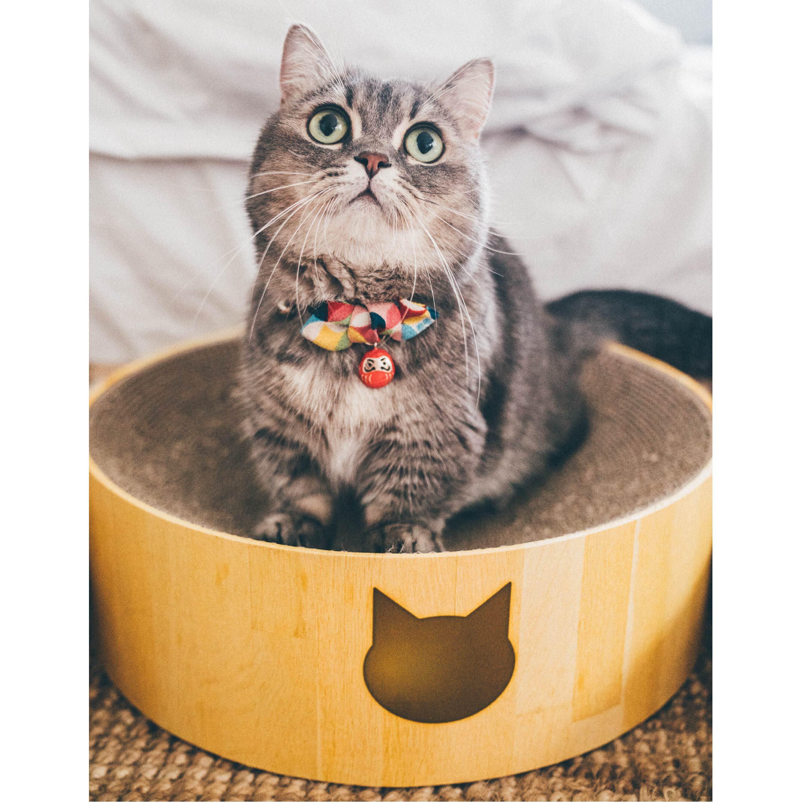 猫のためにどれを選ぶ?各種爪とぎのメリット・デメリット