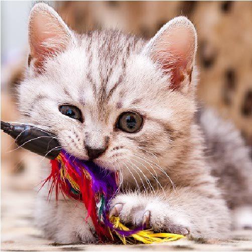そのおもちゃ、大丈夫??身近にある猫にとって危険なおもちゃとは?