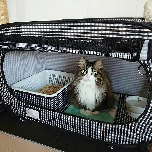 猫壱ポータブルトイレを「システムトイレ風」に使ってみた