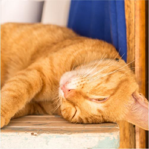 白目で眠る猫は病気じゃない?ちょっと気になる猫の白目