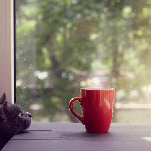 猫が牛乳を飲んじゃったけど大丈夫?!猫が飲んでもいい飲み物とは?