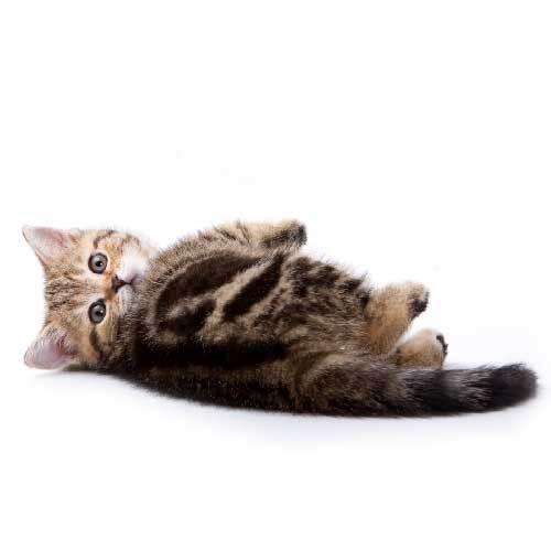 名前を呼んだら振り向いて!猫に名前を覚えてもらうため3のつのポイント
