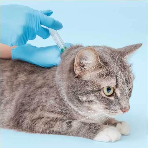 国が装着を義務化してるって本当?猫にマイクロチップを装着した方がいい?