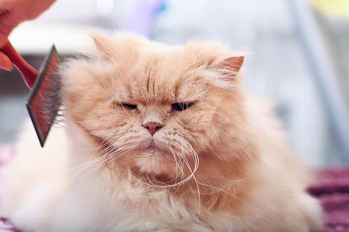 【猫の抜け毛】猫の毛が大量に抜けるとき:猫のアトピー性皮膚炎とは