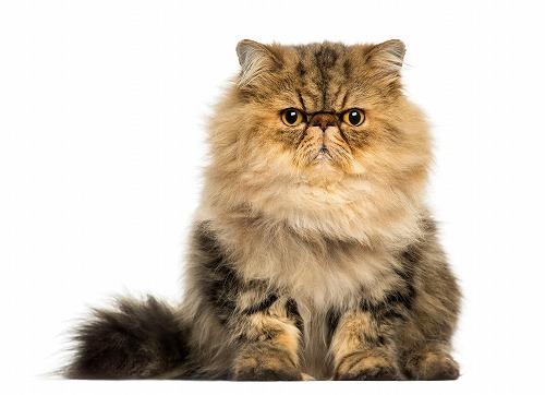 どうして猫は驚くと毛が逆立つの?意外と知らない猫毛への疑問!
