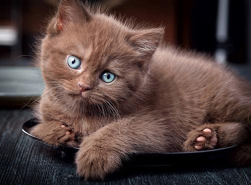 痛くても伝えられない!愛猫の痛みはこの3つの仕草をチェックしよう