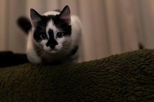 猫の謎のトイレハイ(泣)猫の飼い主さんにありがちな悩みを解決!
