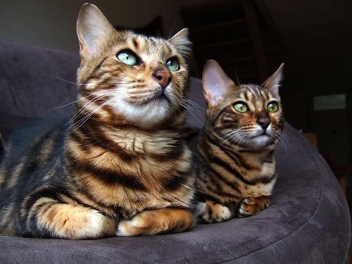 猫の気持ちを読み取るサインはこの3つ!猫が発するボディランゲージ