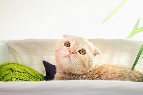 あなたよりも〇〇が大事。猫に嫌われないために、知っておきたい猫の本音