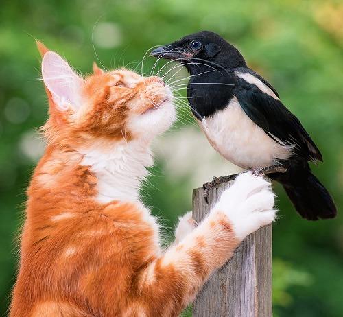 犬と猫とカラス、一番賢い動物はどれ?動物のなるほど不思議学