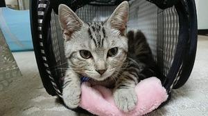 猫の防災、猫に必要な防災グッズはこの3つ!確実に来る地震災害に備えよう
