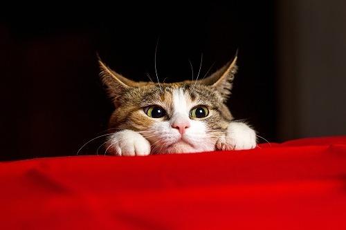 犬好きと猫好きでは人生がこんなに違った…。一緒に暮らすならどっち?