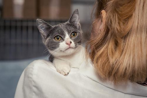 猫は抱っこされるのが好きor嫌い?猫が喜ぶコミュニケーション方法とは