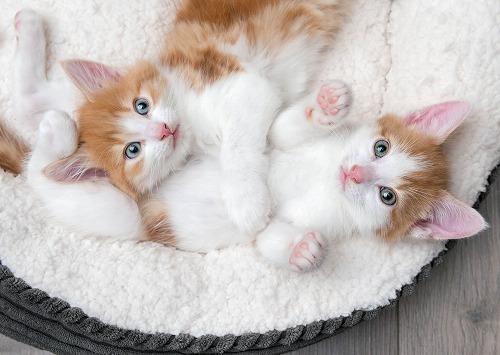 飼い主の87%がやっている愛猫の避妊・去勢手術。猫のメリットとデメリット
