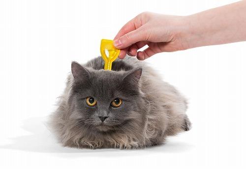 【猫と虫】なんで猫は虫が好きなの?知っておきたい猫と虫の気になる関係