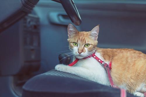 【猫と旅行】猫と車中泊するとき。猫と車で移動する時に気をつけること