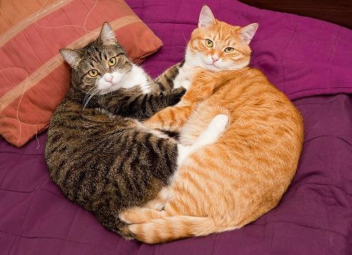 ネコの性格診断テスト。3000匹の猫の研究からわかった「フィーライン5」とは