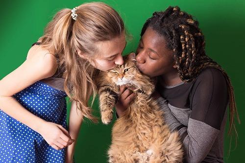 もしもあなたが猫だったら?こんなに違う猫と人間の世界の暮らし