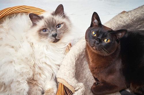 オス猫とメス猫と一緒に暮らす飼い主さんに知っておいて欲しいこと
