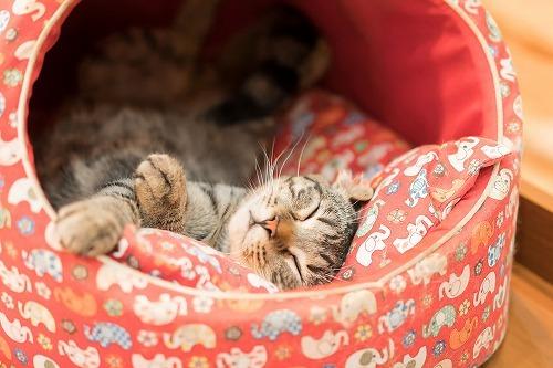 どんなお部屋が猫向きの部屋?猫が快適に過ごせる部屋の条件