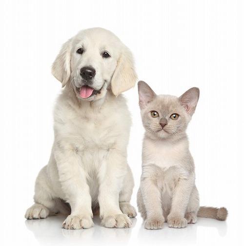 犬と猫、一緒に仲良く暮らすために知っておいて欲しいこと。