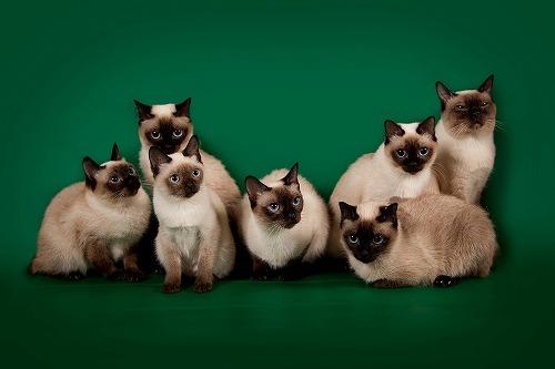 あなたは大丈夫?猫好きが陥りやすい「多頭崩壊」よりも怖い「二次崩壊」とは