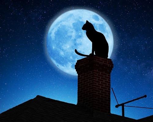 猫と月の不思議な関係。猫が新月に元気になる2つの理由