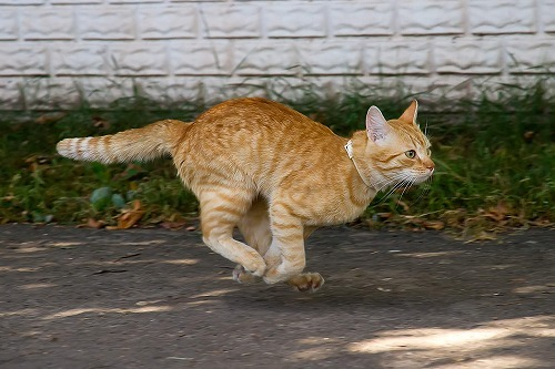 目指せ!全問正解!意外と知らない猫の雑学クイズ