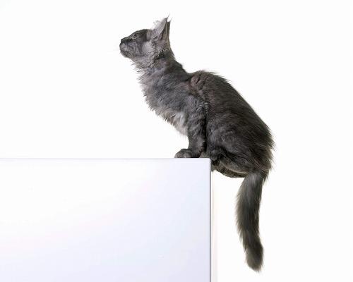 『まだ早い』と思わないで!10歳過ぎから始める老猫介護の基礎作り