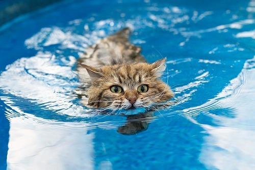 水は『死』を連想する?猫が水を嫌う本当の理由