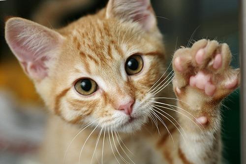 貴方はどうする?猫を飼っていたらするかもしれない究極の選択