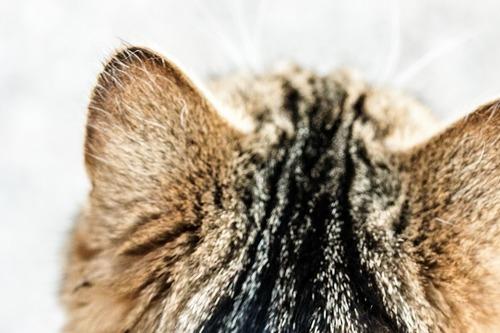もしかして嫌われちゃった?!猫が飼い主を無視する本音