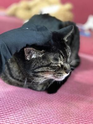 猫壱の靴下の履き心地や毛のつきにくさは?猫にすり付けてみた