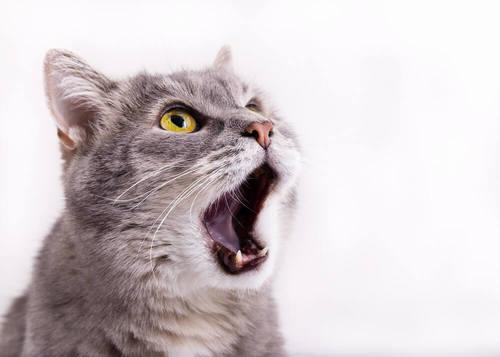 猫の脱水になるのはなぜ?猫の脱水をセルフチェックしよう!