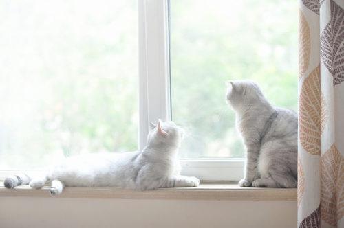 やっちゃダメ!夏に猫を留守番させるときのNG行動