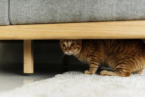ほっといていいの?猫が家のなかで隠れちゃう5つの理由