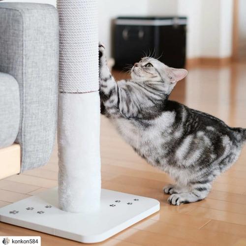 猫は○○ができるように爪を研ぐ!猫が爪を研ぐ3つの理由