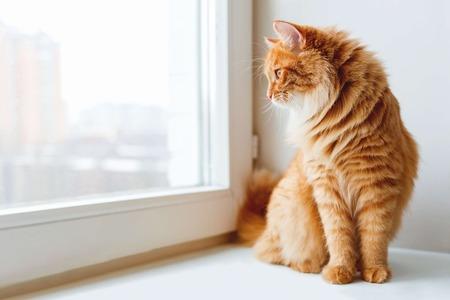 外に出たいの?猫が窓の外を見ている4つの理由
