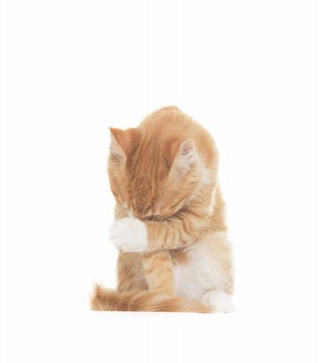 ちゃんと話聞いてるの?猫が反省しているときに見せる2つの仕草