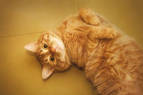 猫はしゃっくりをするの?猫がしゃっくりをする原因